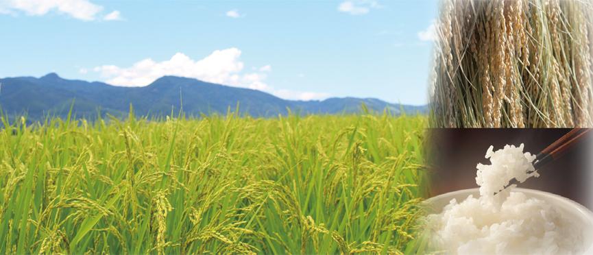 "Production center ""Tsunan-machi"" of rice full of charm"
